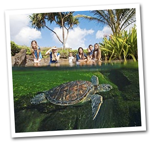 Maui Tours and Activities Travel Packages